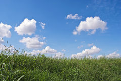 Sky and grass. Wild country grass with gorgeous sky on the background Stock Image