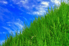 Sky and grass. Diagonal of sky and grass stock photography