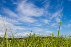 Sky grass Stock Photography