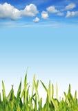 Sky grass Royalty Free Stock Image