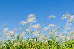 Sky and grass in autumn Royalty Free Stock Photography