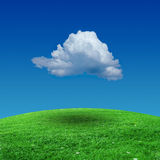 Sky and grass. Background of sky and grass Stock Image