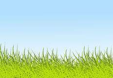 Sky and grass background Stock Image
