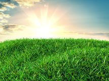 Sky and grass background, fresh green fields. Under the blue sky. 3d illustration Stock Image