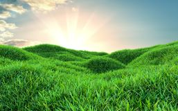 Sky and grass background, fresh green fields. Under the blue sky. 3d illustration Royalty Free Stock Photography