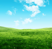 Sky and grass background. Green fields under the blue sky Stock Photos