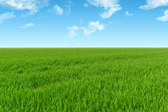 Sky and grass background. Green fields under the blue sky Stock Image