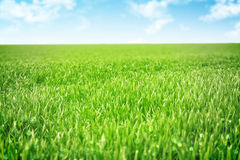 Sky and grass background. Shallow field of view Royalty Free Stock Photos