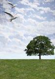 Sky grass bird Stock Photography