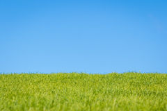 Sky and Grass Royalty Free Stock Photo