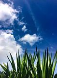 Sky and grass. Blue sky And green grass Beautiful summer colors Royalty Free Stock Photos