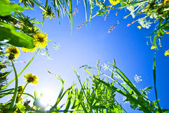 Sky through the grass with flowers Stock Image