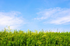 The sky and the grass. Plants in the sky with clouds Stock Photos
