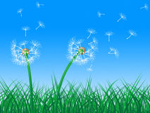 Sky Grass Represents Dandelion Hair And Dandelions Royalty Free Stock Photo