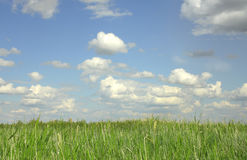 Sky and grass. Summer background Stock Images