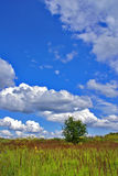 Sky, grass and tree. Summer landscape with blue sky, green grass and tree Royalty Free Stock Images