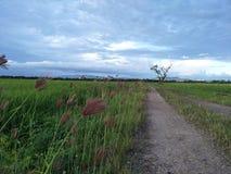 Sky, Grassland, Ecosystem, Field royalty free stock image
