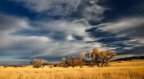 Sky, Grassland, Ecosystem, Prairie royalty free stock photos