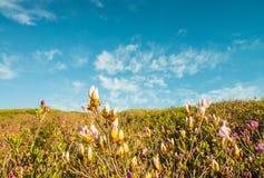 Sky, Grassland, Ecosystem, Prairie stock photography