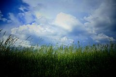 Sky, Grassland, Field, Ecosystem stock photos