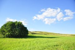 Sky, Grassland, Field, Meadow royalty free stock images
