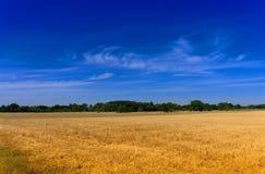 Sky, Grassland, Field, Prairie royalty free stock photography