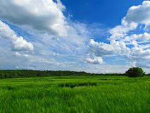 Sky, Grassland, Field, Prairie stock photos