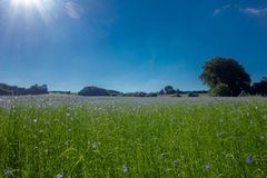 Sky, Grassland, Meadow, Field royalty free stock images