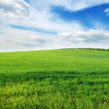 sky and green field Stock Photos