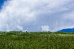 Sky with green fields. Bang Phra, Chonburi, Thailand Royalty Free Stock Photos