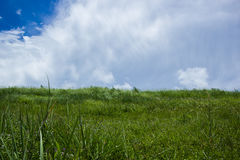 Sky with green fields. Bang Phra, Chonburi, Thailand Royalty Free Stock Image