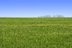 Sky and green grass landscape Stock Photography