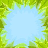Sky and green leaves Royalty Free Stock Photos