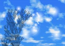 Sky and herb Royalty Free Stock Photo