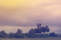 Sky and landscape background in sweet purple color warm Royalty Free Stock Photography