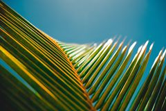Sky, Leaf, Close Up, Light Royalty Free Stock Photo