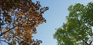 tree leaf combination royalty free stock photo
