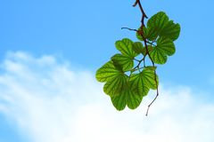Sky, Leaf, Green, Branch Stock Photo