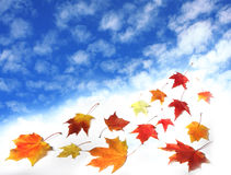 Sky and leaves. Blue sky and autumn leaves Stock Images