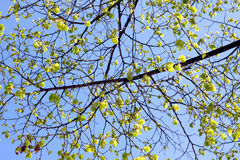 Sky and Leaves Royalty Free Stock Images