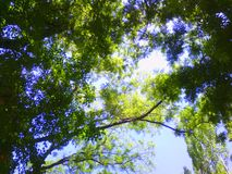Sky and leaves Stock Photo