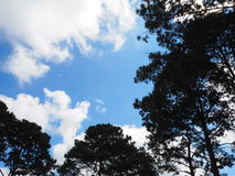 Sky light tree bottom. Sky sun lihgt green winter leaver fog stock photography