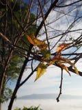 Sky light tree. Sky sun lihgt green winter leaver fog stock photos