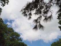 Sky light tree. Sky sun lihgt green winter leaver fog royalty free stock photos