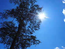 Sky light tree. Sky sun lihgt green winter leaver fog stock photography