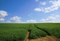 The sky is the limit!. Green meadow with a road to the horizon Royalty Free Stock Photography