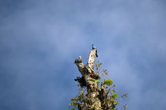 Sky is the limit. Bird sitting on a high tree against the bright blue sky Stock Images