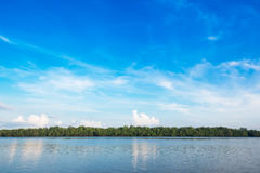 Sky and mangrove forest at coast Stock Photography