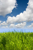 Sky and meadow Stock Images
