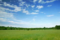 Sky & Meadow Royalty Free Stock Photos